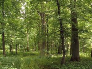 Kam parduoti mišką brangiau?